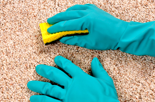 carpet cleaners burnley